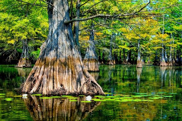 5 Unmissable Louisiana Adventures Louisiana Swamp Alligator