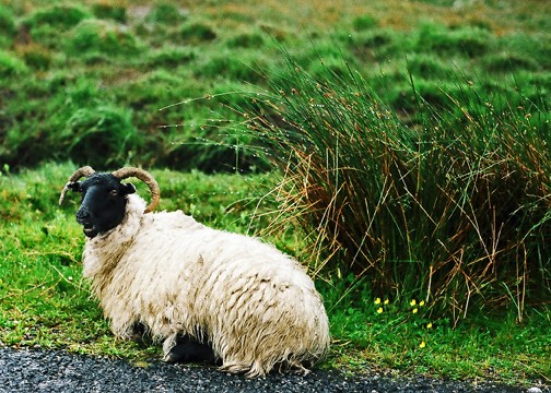 Cultural Tips for Traveling in Ireland