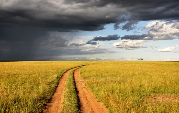 Looking for a travel guide to Kenya? Click through for a local's travel tips - what to do, where to go, and how to travel Kenya cheaply, safely, and respectfully!