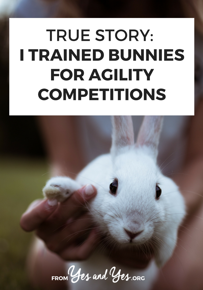 Interested in bunny agility? Looking for bunny training tips? Click through for one woman's story of training her rabbits!