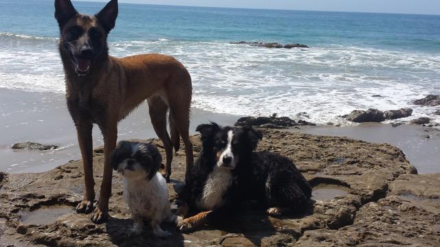 pro-dog-trainer