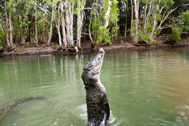 Crocodile tours in Australia, things to do in Australia